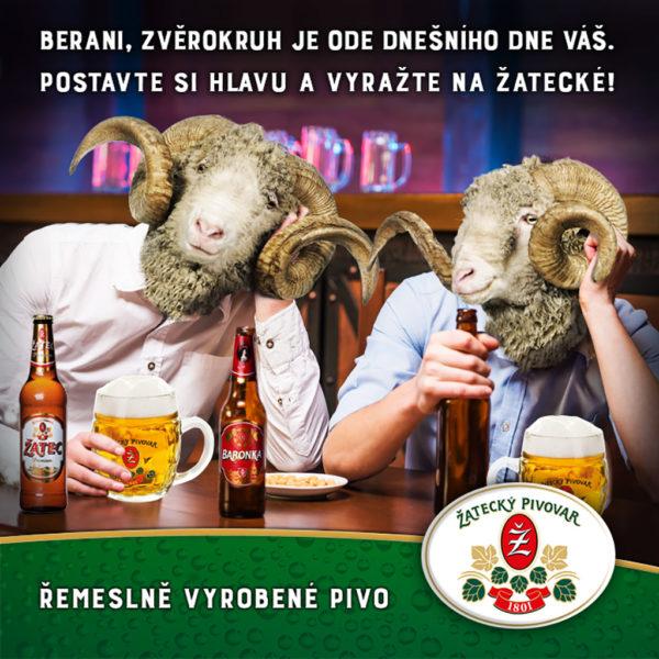 zatecky_pivovar_FB_2016_berani