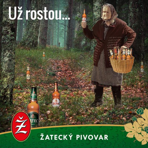 zatecky_pivovar_FB_2017_uz_rostou